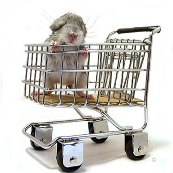Buying a Chinchilla - A chinchilla baby posing in a shopping trolley. � Jo Ann McCraw.