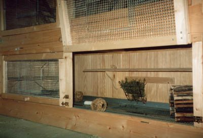 Cage maintenance is paramount towards good health and vitality. © Chinchilla Chronicles.