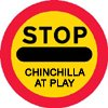 Chinchilla Exercise - Make sure everyone in your household knows when your chinchilla is out to play.