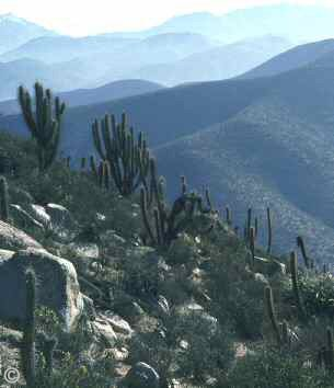 Chinchilla Habitat - This photo shows the wild chinchilla's habitat in The Andes Mountain Range of Chile. � Jamie E. Jimenez.