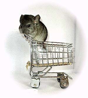 Chinchilla kit waiting in a shopping trolley. © Jo Ann McCraw
