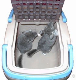 Two chinchillas in a travel box, which is completely safe and secure when the lid is lowered and closed. ©