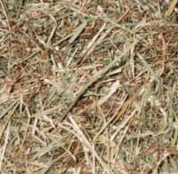 Chinchilla Nutrition (Food and Diet) - A hay mix including common prairie grasses, meadow hay, orchard grass and timothy hay.