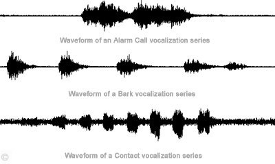 Vocal Sounds - Waveform of various vocalization series.  Bartl.